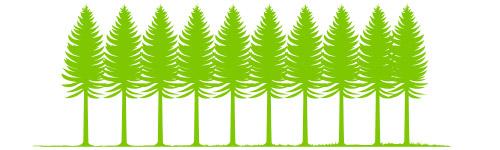 Peuplement plantation