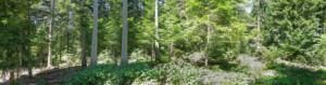 Réunion d'information Chartreuse : Gestion en futaie irrégulière @ Entremont-le-Vieux | Auvergne-Rhône-Alpes | France
